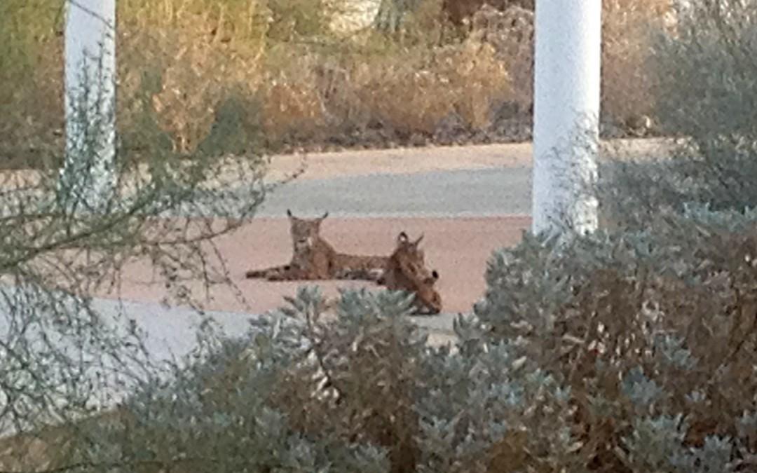 Bobcats Visit