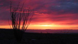 Ocotillo Salton Sea sunrise