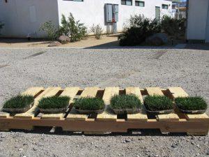 Grass trays