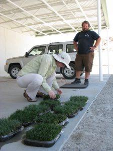 Inspecting grass