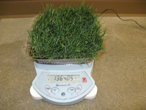 grass on scale