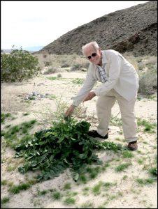 Sam Webb finding Sahara Mustard