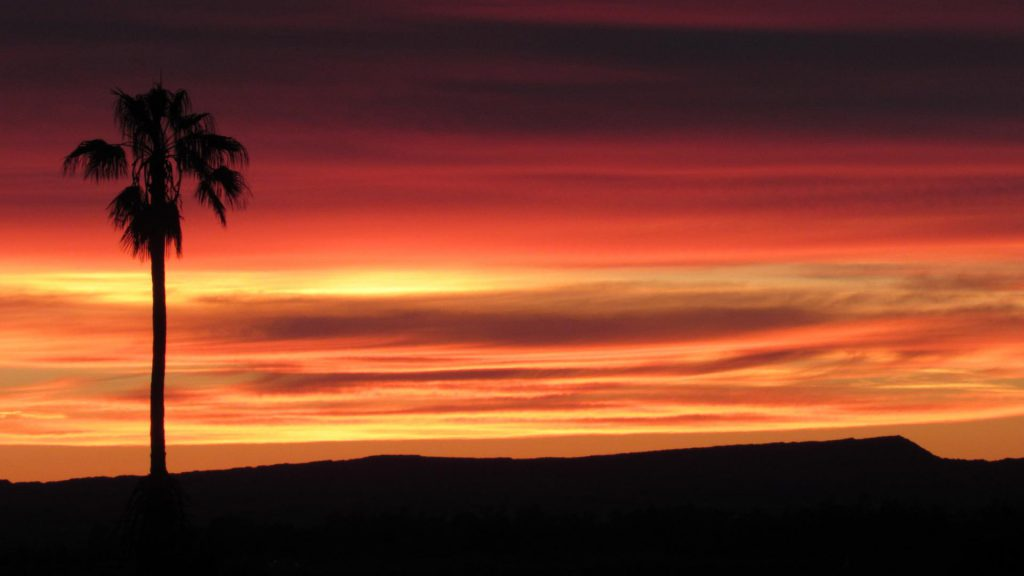 Desert sunrise with palm tree (Photo: Sicco Rood).