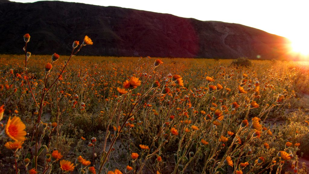 Henderson Canyon in the early morning. (Photo: Sicco Rood)
