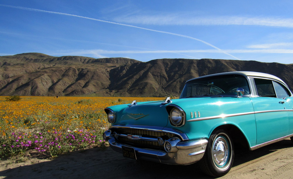 Visitors flocking to see the flower fields, like the visitors with this beautiful '57 Chevy car (Photo: Sicco Rood)